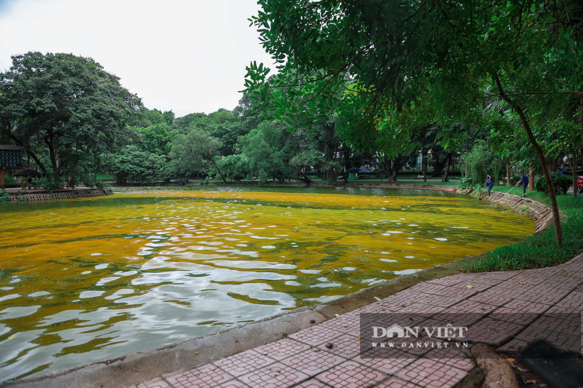 Hà Nội: Mặt nước hồ Bách Thảo bất ngờ chuyển màu vàng lạ mắt - Ảnh 2.