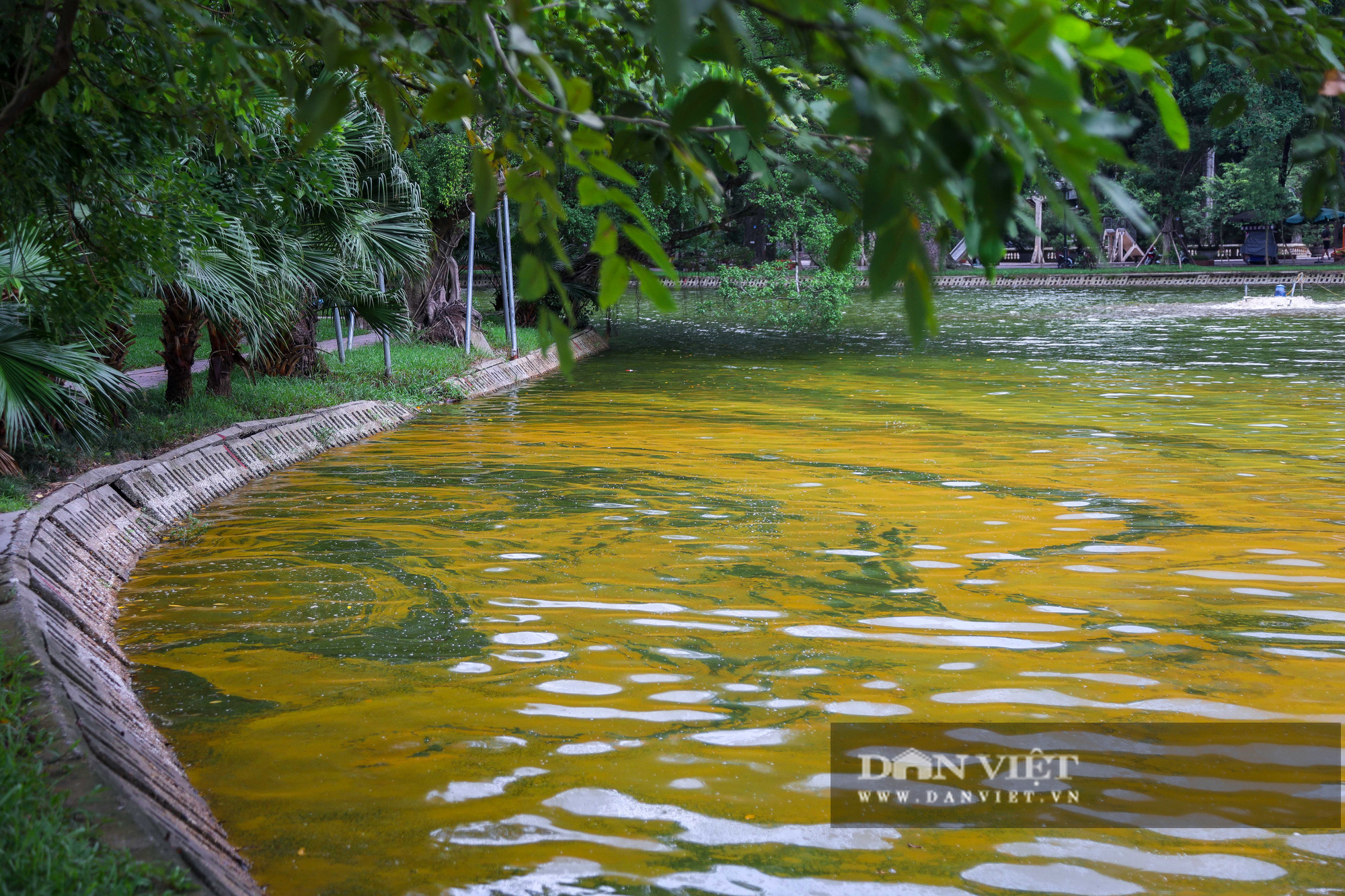 Hà Nội: Mặt nước hồ Bách Thảo bất ngờ chuyển màu vàng lạ mắt - Ảnh 3.