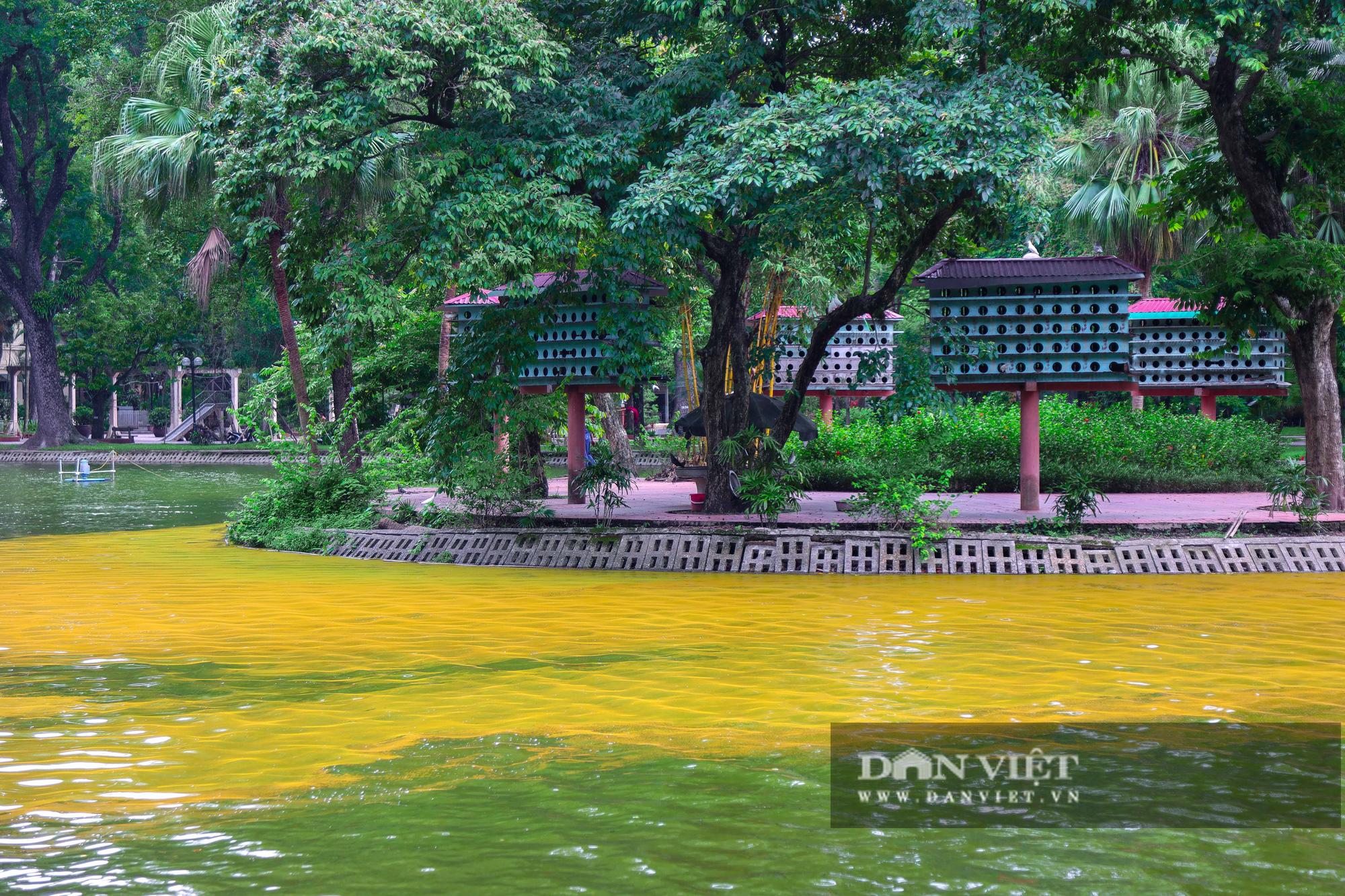Hà Nội: Mặt nước hồ Bách Thảo bất ngờ chuyển màu vàng lạ mắt - Ảnh 4.