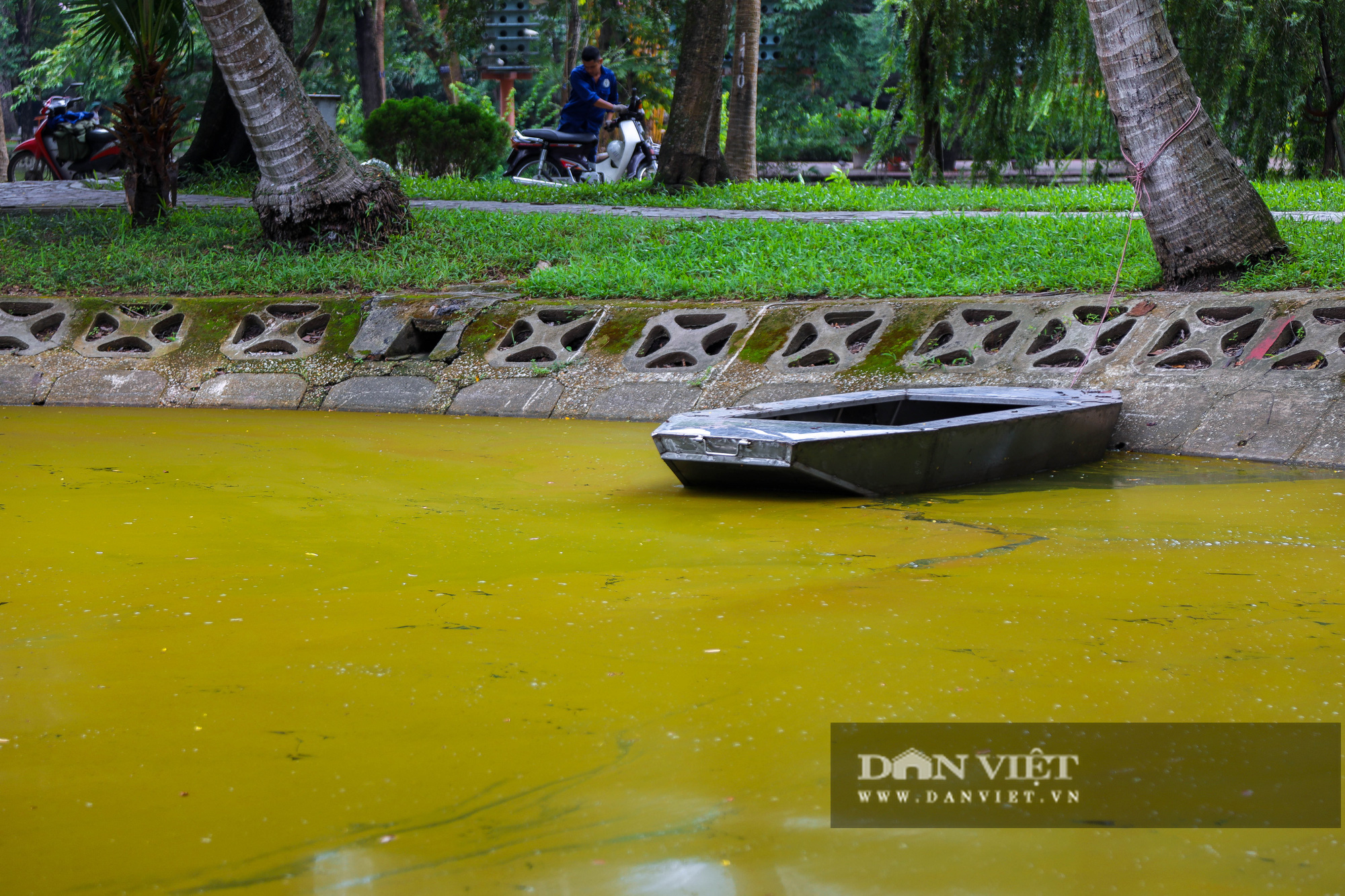Hà Nội: Mặt nước hồ Bách Thảo bất ngờ chuyển màu vàng lạ mắt - Ảnh 5.