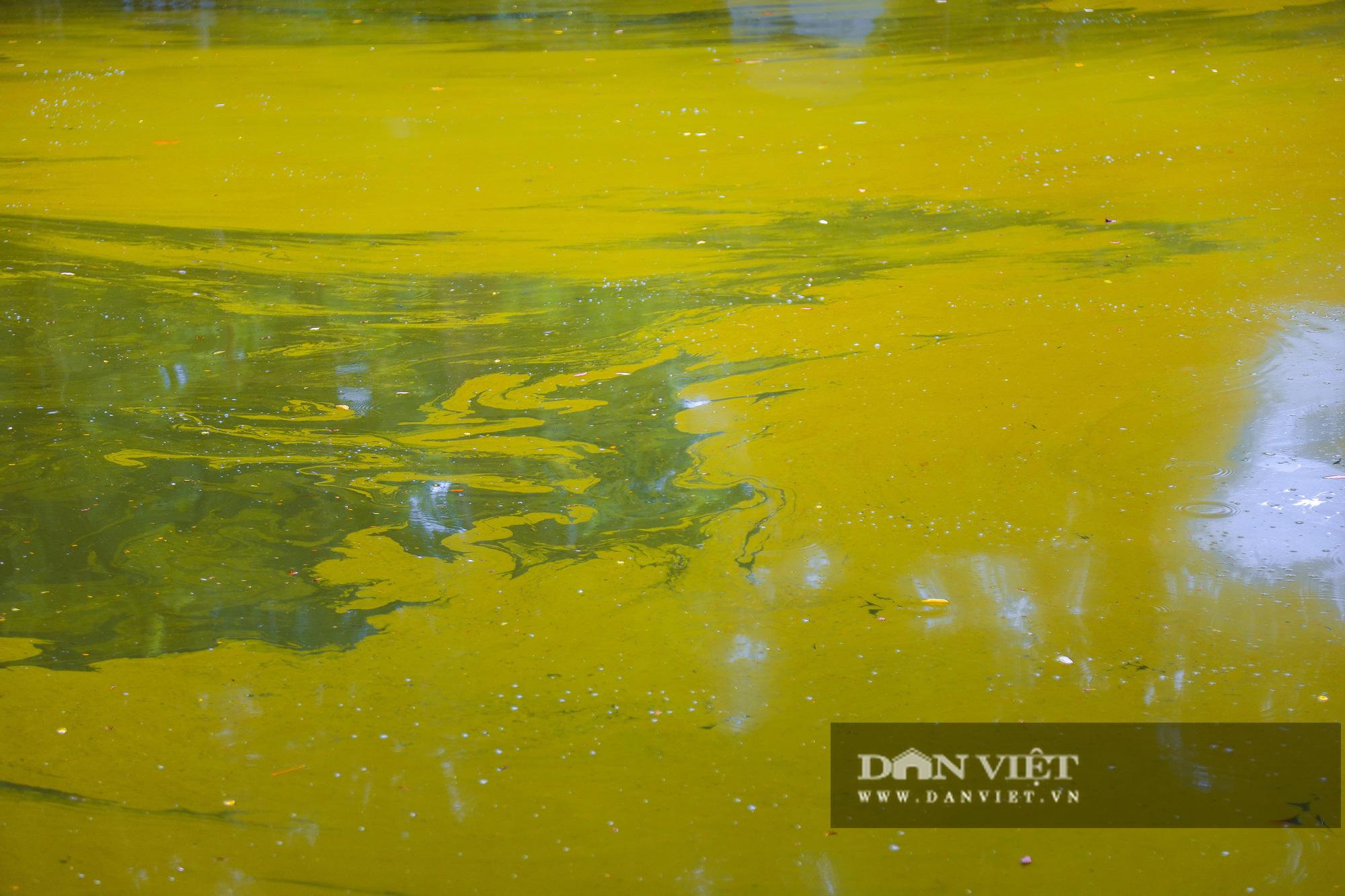 Hà Nội: Mặt nước hồ Bách Thảo bất ngờ chuyển màu vàng lạ mắt - Ảnh 6.