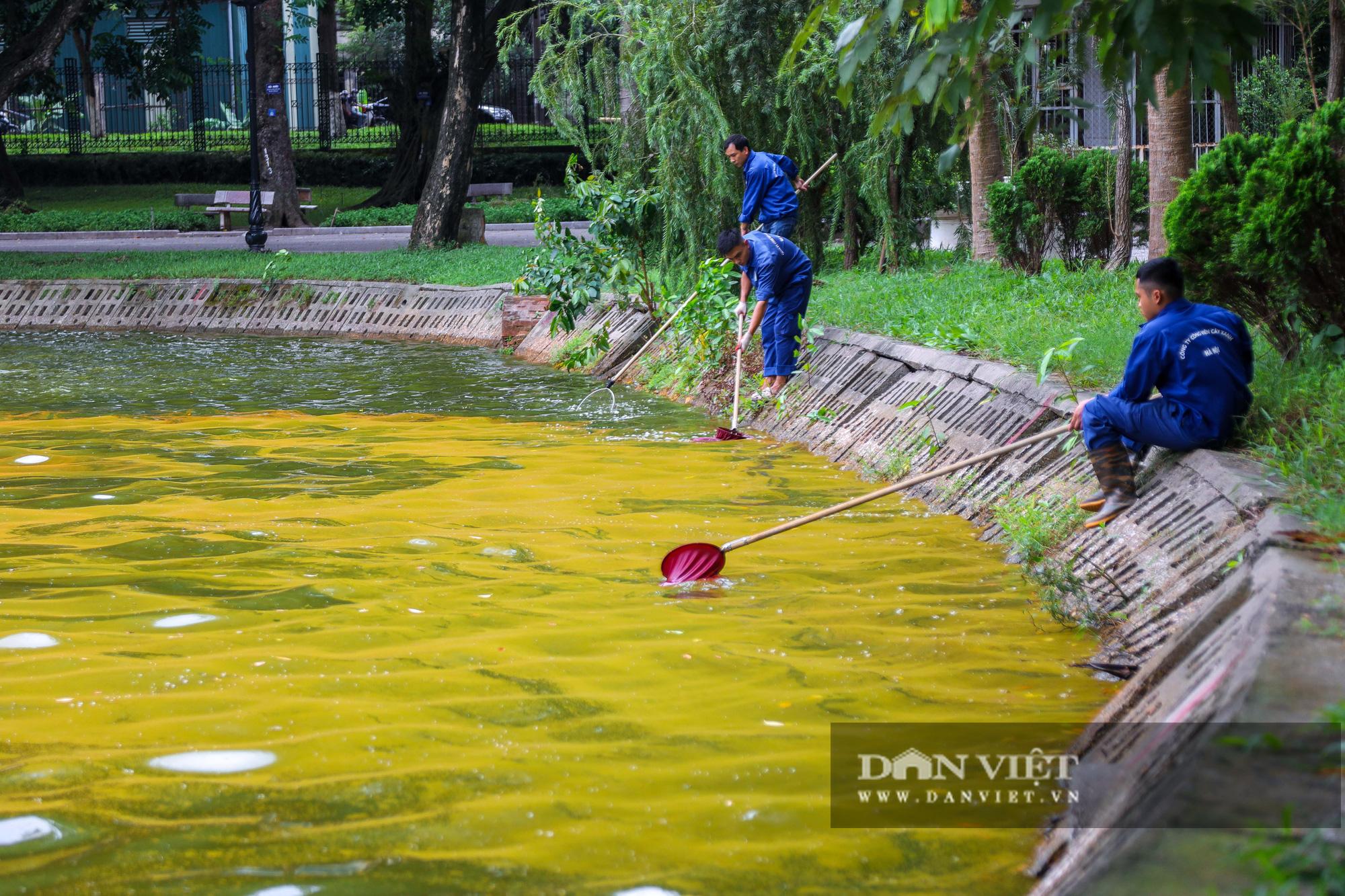 Hà Nội: Mặt nước hồ Bách Thảo bất ngờ chuyển màu vàng lạ mắt - Ảnh 7.