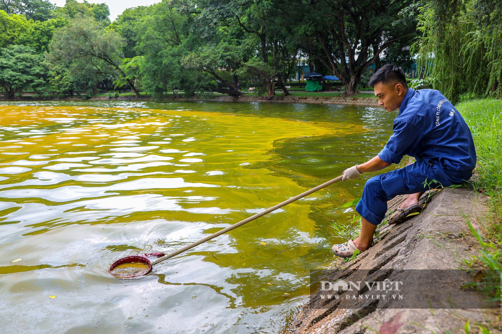 Hà Nội: Mặt nước hồ Bách Thảo bất ngờ chuyển màu vàng lạ mắt - Ảnh 8.