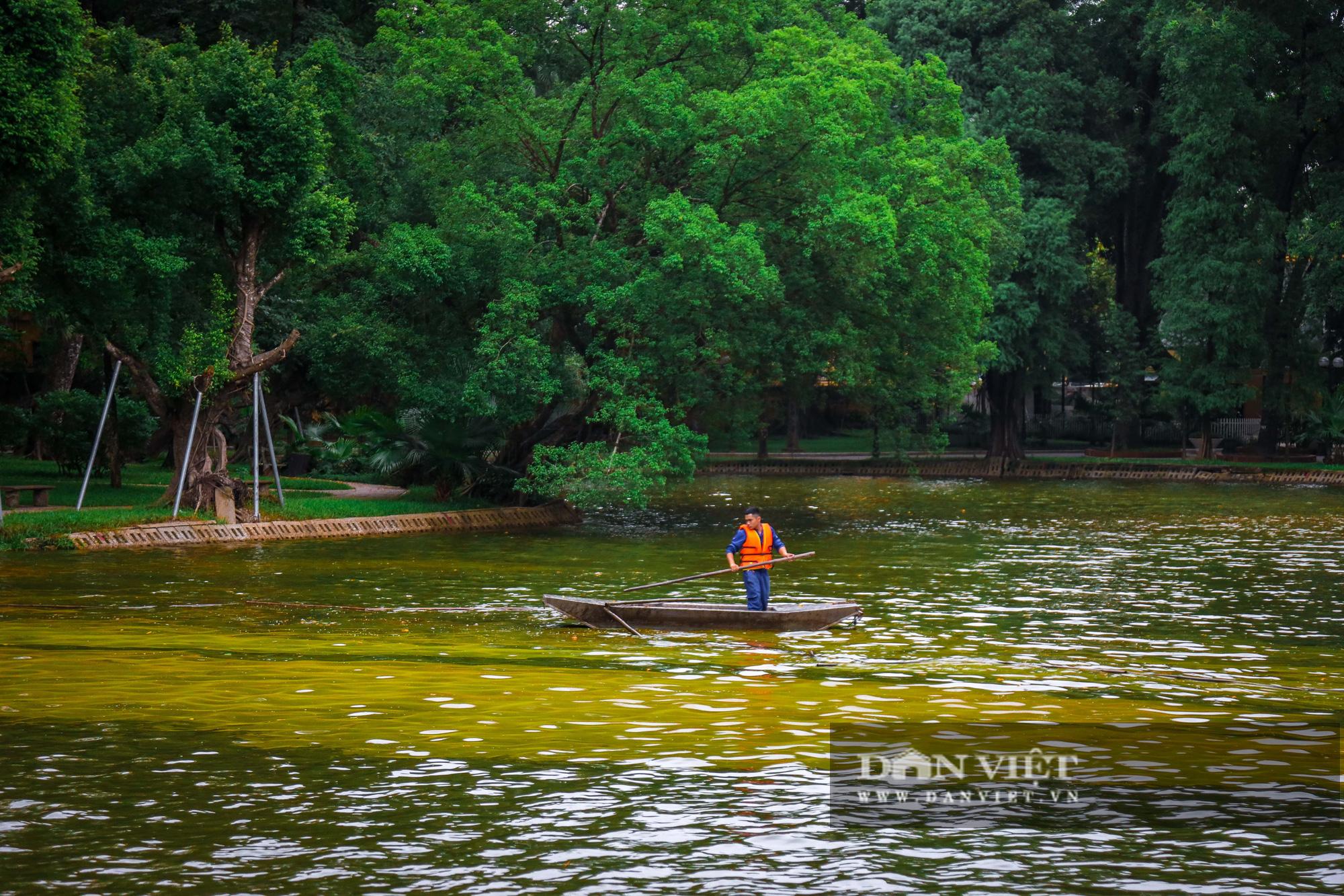 Hà Nội: Mặt nước hồ Bách Thảo bất ngờ chuyển màu vàng lạ mắt - Ảnh 12.