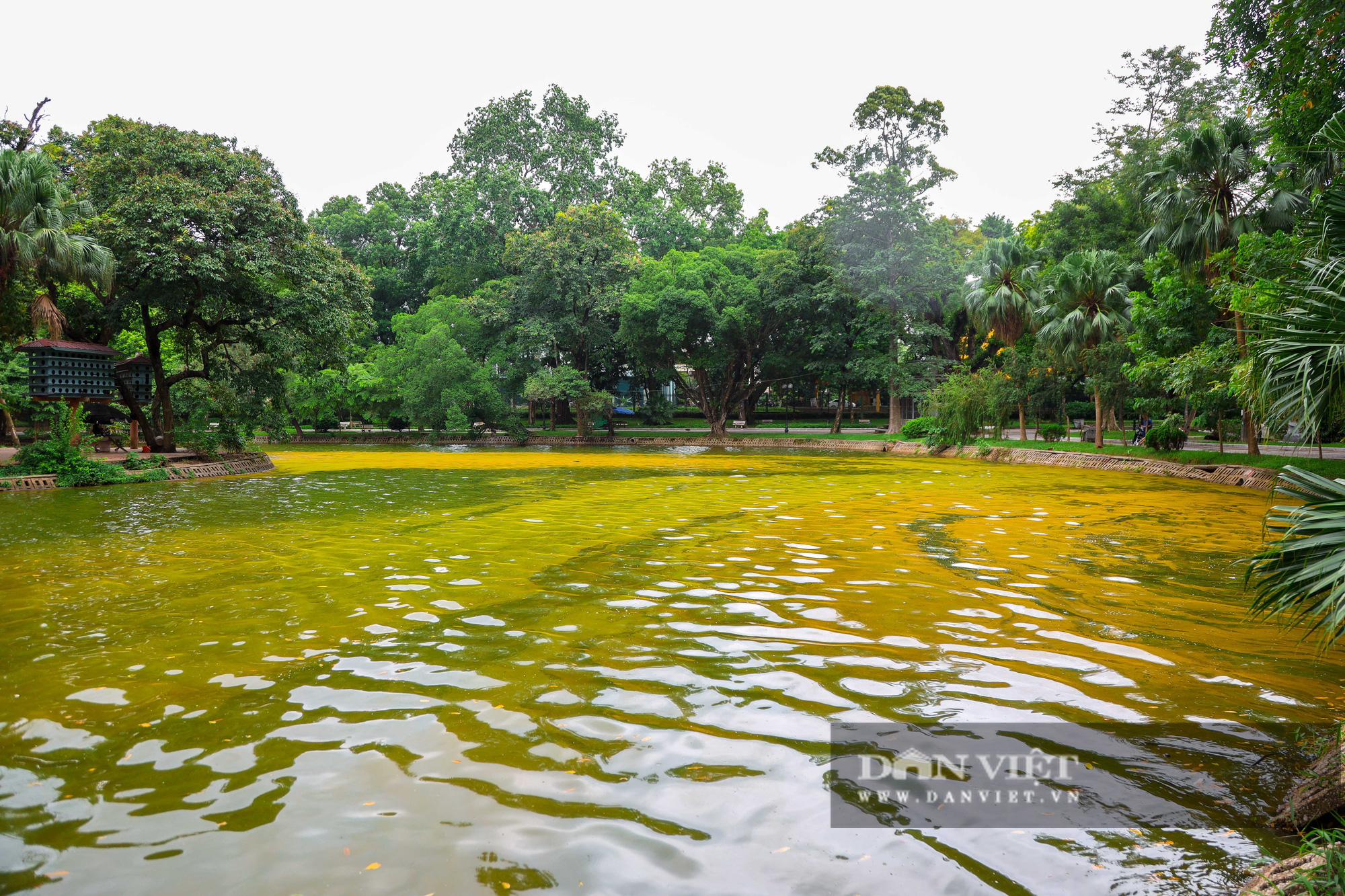 Hà Nội: Mặt nước hồ Bách Thảo bất ngờ chuyển màu vàng lạ mắt - Ảnh 13.