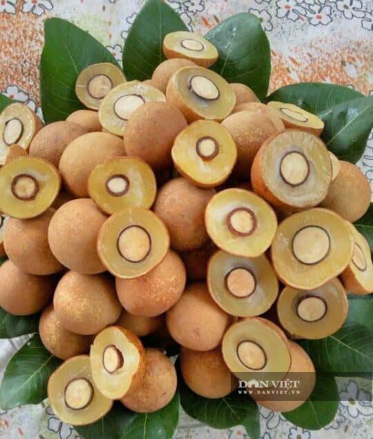 """Nhãn ngon """"chính hãng"""" đặc sản Hưng Yên đắt khách, có loại bán 50.000 đồng/kg, khách muốn ăn phải đặt trước cả năm - Ảnh 3."""