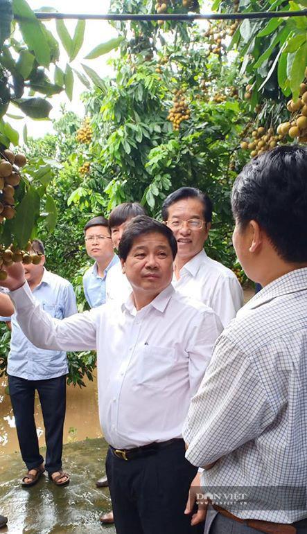 """Nhãn ngon """"chính hãng"""" đặc sản Hưng Yên đắt khách, có loại bán 50.000 đồng/kg, khách muốn ăn phải đặt trước cả năm - Ảnh 5."""