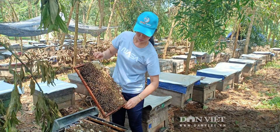 Nuôi ong mật VietGAP thu cả tỷ đồng mỗi năm - Ảnh 1.