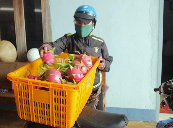 Nông dân Đắk Lắk điêu đứng vì thanh long rớt giá còn 2.000 đồng/kg - Ảnh 2.
