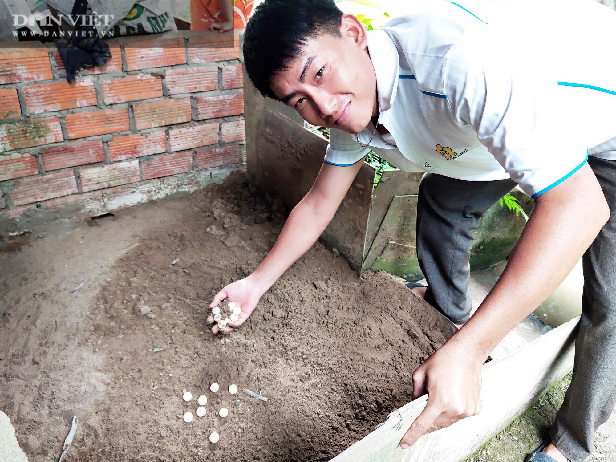 Sóc Trăng: Anh nông dân kiếm vài trăm triệu/vụ nhờ 15 năm đam mê nuôi ba ba - Ảnh 5.