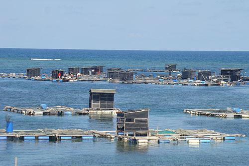 Bình Thuận: Ra đảo Phú Quý, bất ngờ tôm hùm khổng lồ ở Ngũ Phụng, ăn 1 lần cho biết - Ảnh 1.
