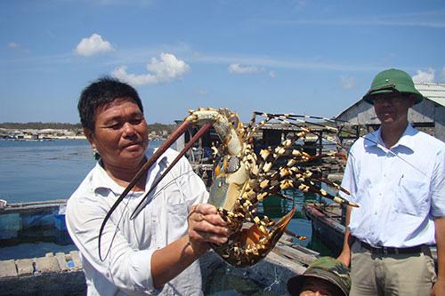 Bình Thuận: Ra đảo Phú Quý, bất ngờ tôm hùm khổng lồ ở Ngũ Phụng, ăn 1 lần cho biết - Ảnh 3.