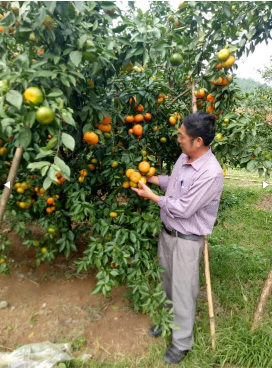 Yên tâm lên chợ thương mại điện tử mua - bán nông sản - Ảnh 1.