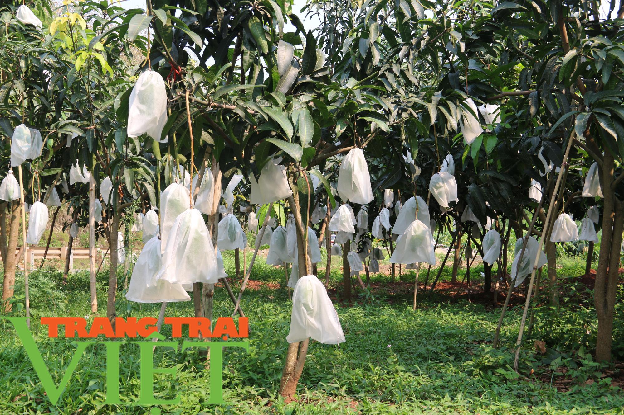 Hội Nông dân Yên Châu: Nhiều giải pháp giúp hội viên phát triển sản xuất - Ảnh 2.