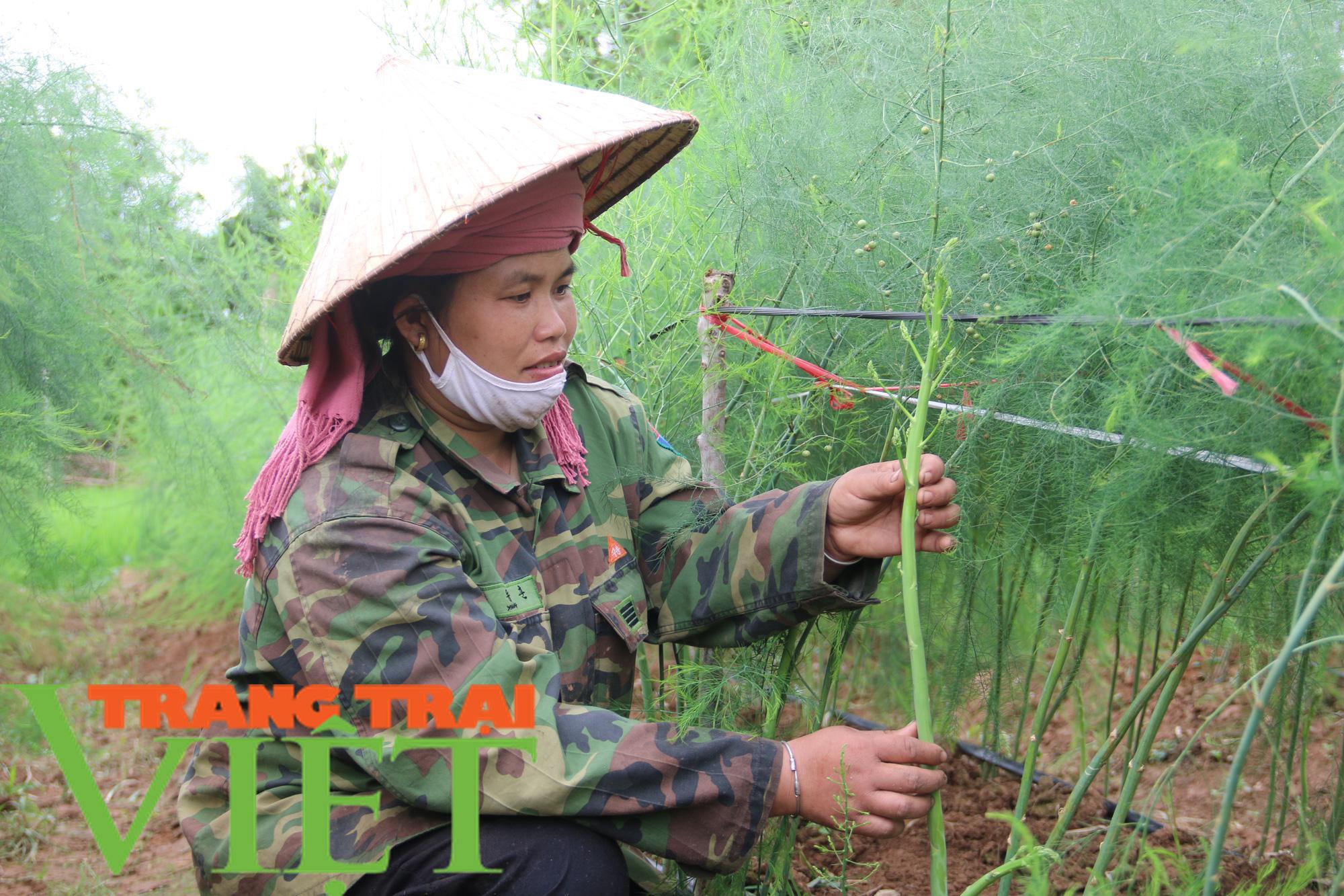 Hội Nông dân Yên Châu: Nhiều giải pháp giúp hội viên phát triển sản xuất - Ảnh 3.