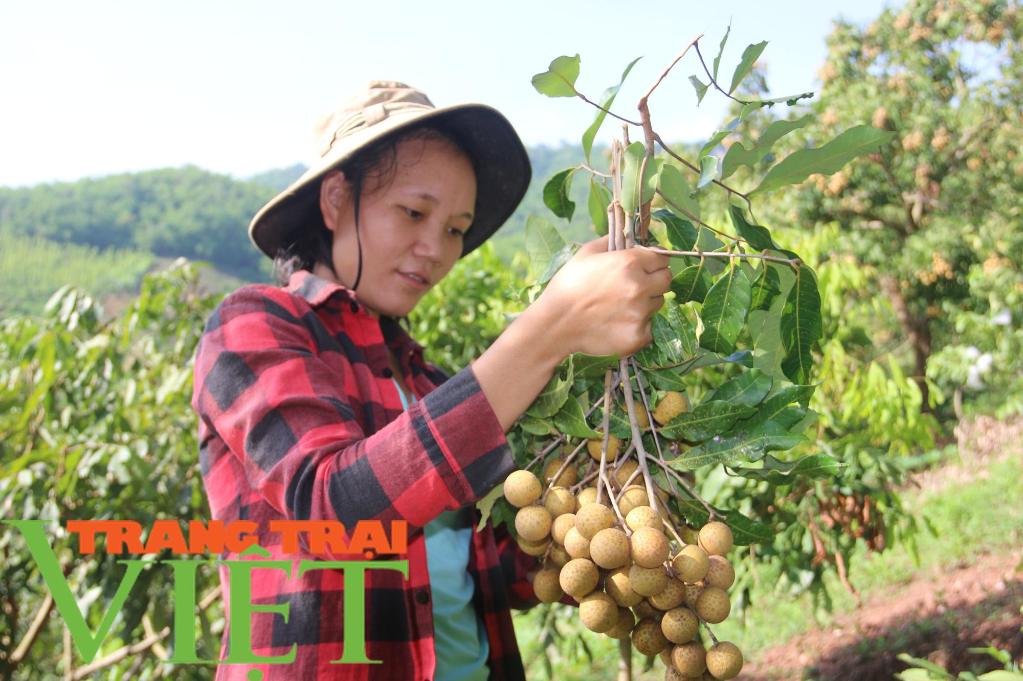 Hội Nông dân Yên Châu: Nhiều giải pháp giúp hội viên phát triển sản xuất - Ảnh 1.