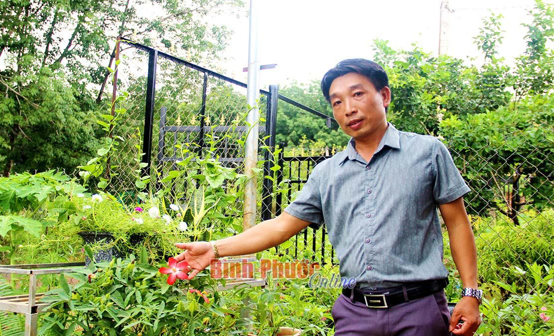 Làm giàu khác người: Một thầy giáo Bình Phước kiếm bộn tiền nhờ trồng sâm chế ra thứ trà bình dân - Ảnh 1.