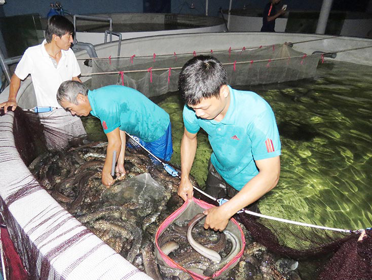 """Quảng Bình: """"Đánh liều"""" nuôi loài cá vừa dài vừa trơn, con nào cũng to bự, 9X thu tiền tỷ - Ảnh 1."""