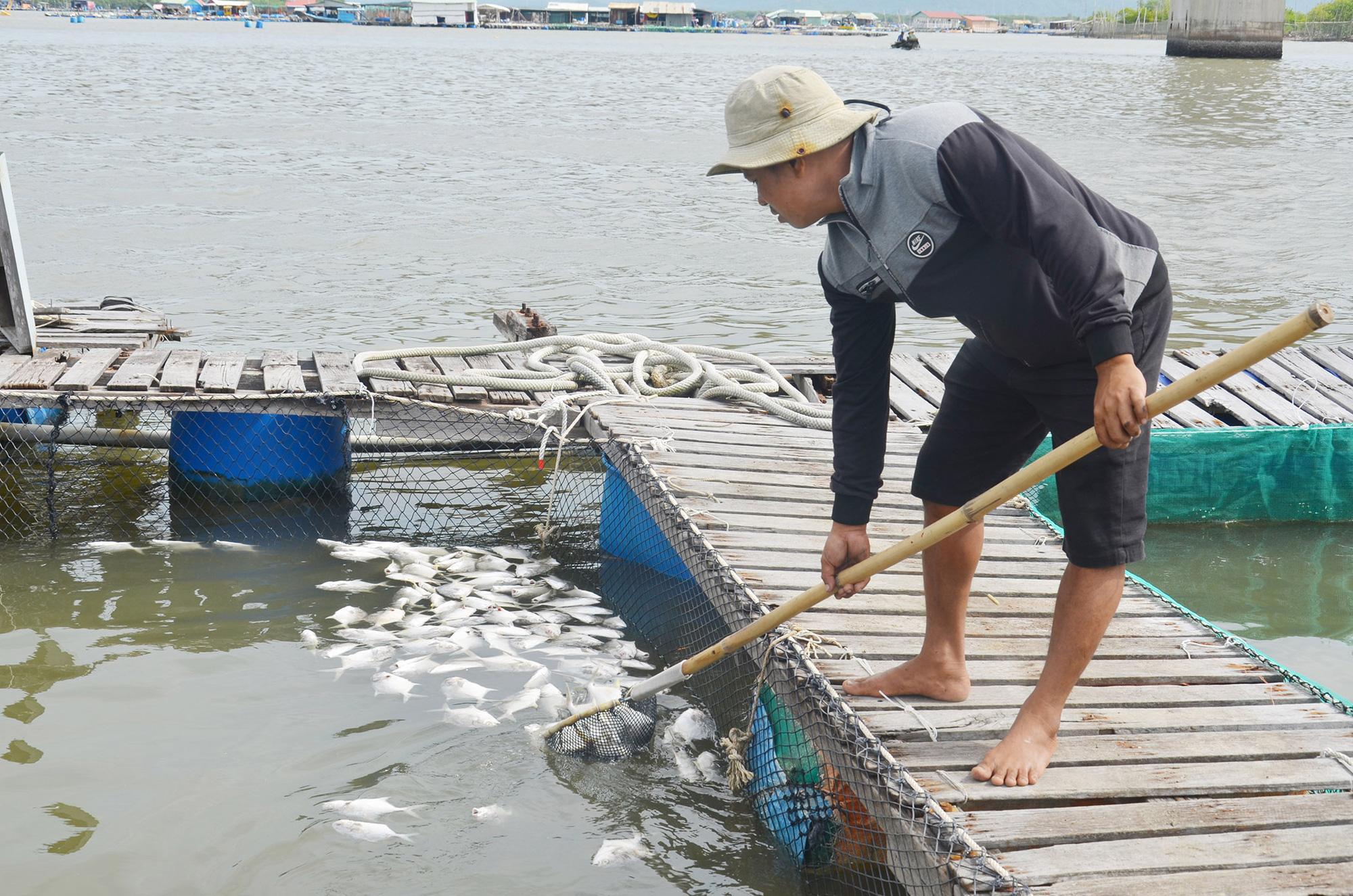Xót xa, cuộc giải cứu bất thành hàng trăm ngàn con cá đặc sản trên sông Chà Và - Ảnh 1.