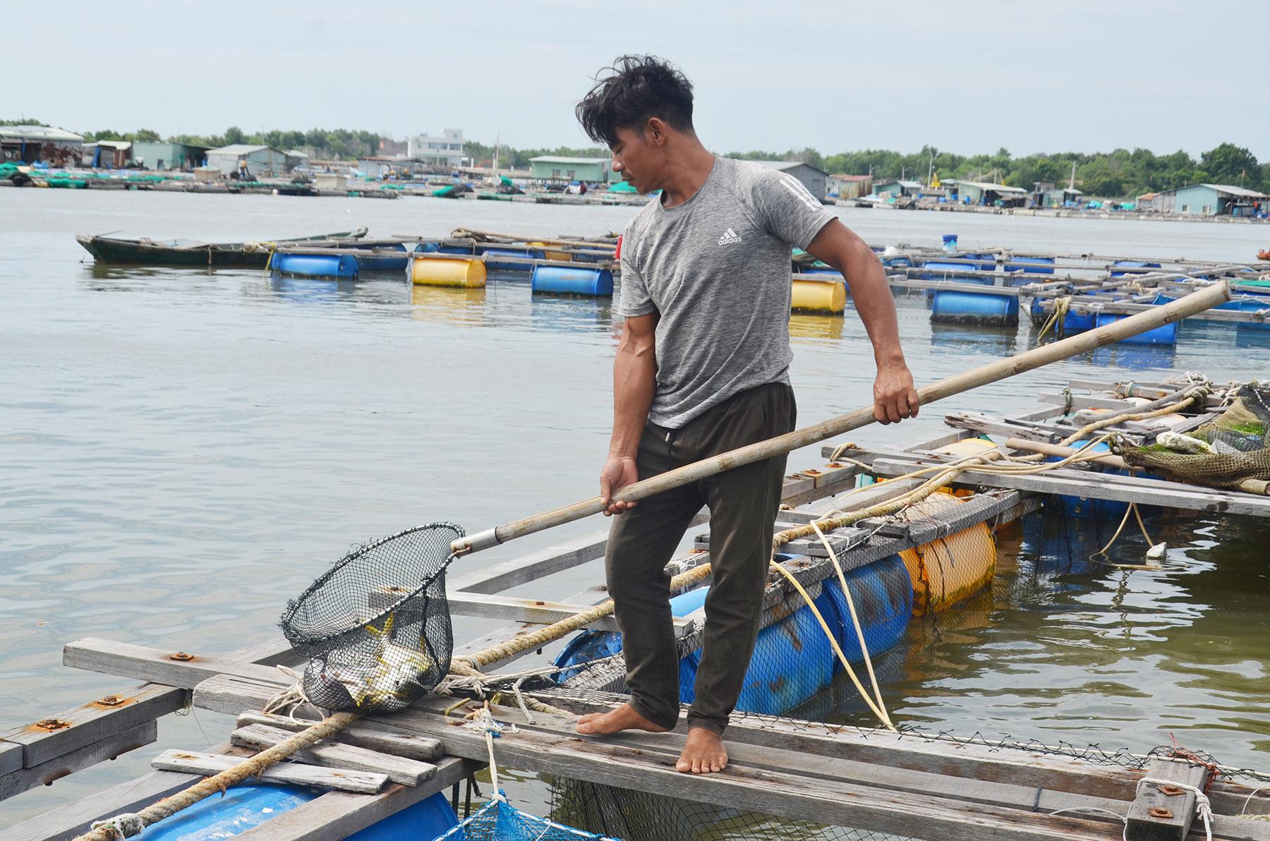 Xót xa, cuộc giải cứu bất thành hàng trăm ngàn con cá đặc sản trên sông Chà Và - Ảnh 2.