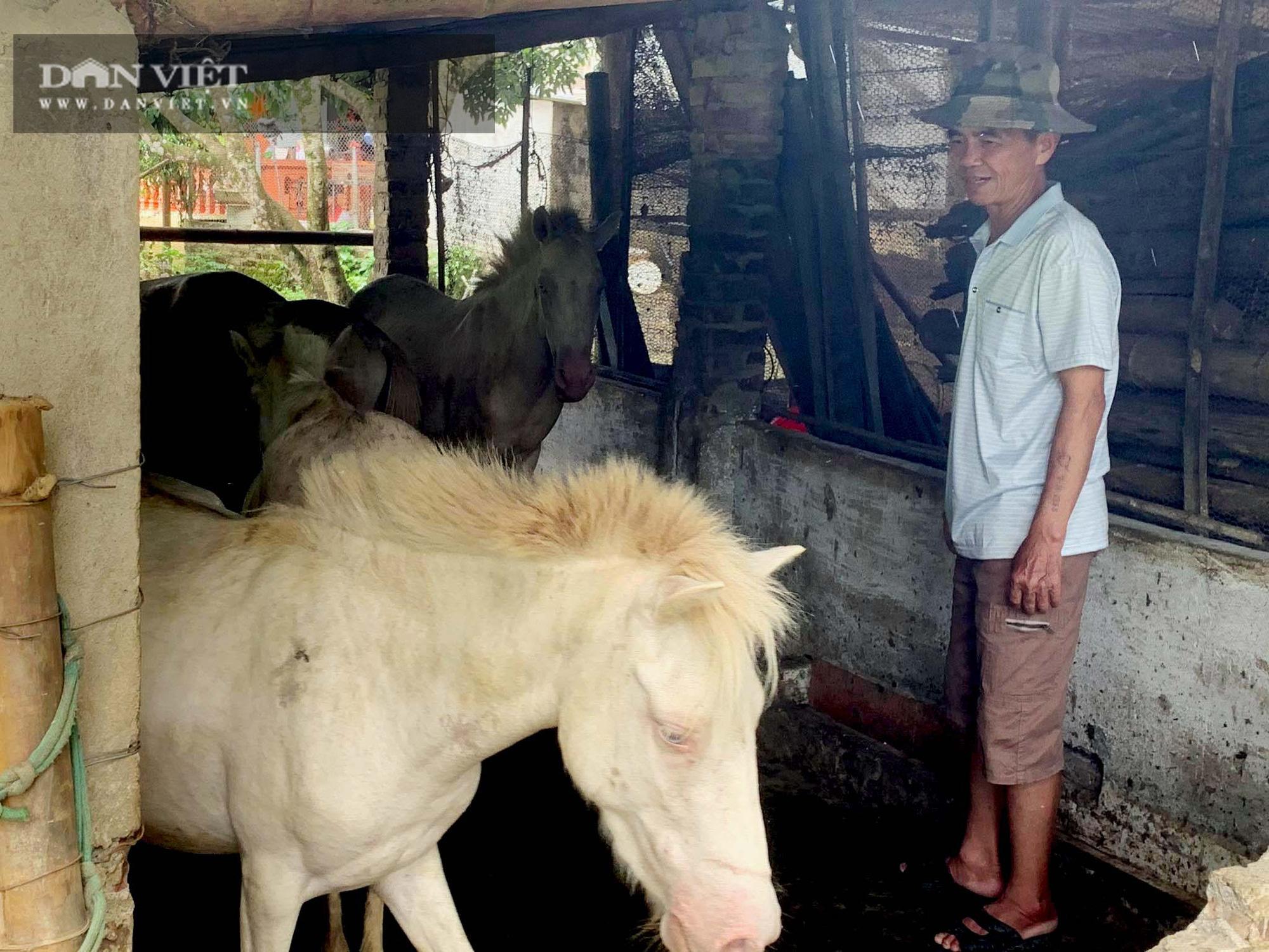 Nuôi ngựa ăn quanh gốc, ít phải làm cỏ, lão nông thu 150 triệu đồng/vụ từ cây có múi - Ảnh 3.
