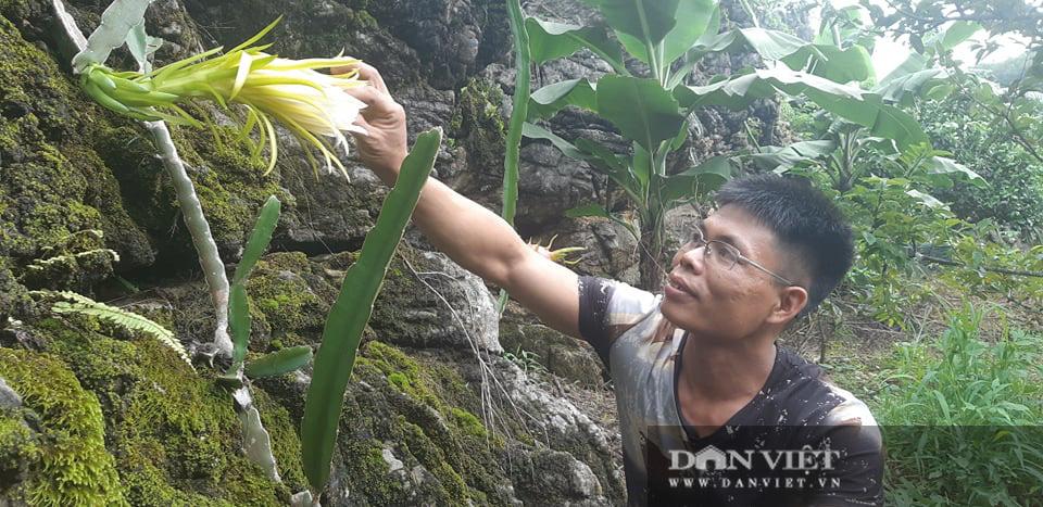 Trồng thanh long trắng trên đá, vừa có quả ăn, hoa bung nở đẹp như phim ngôn tình  - Ảnh 2.