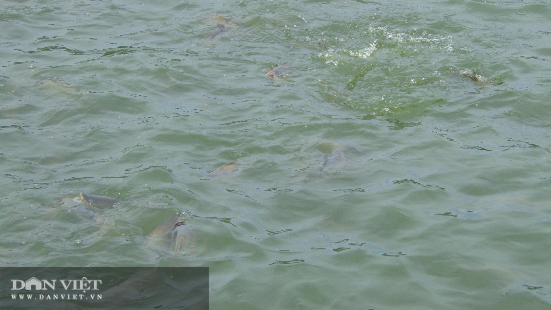Thái Nguyên: Lão nông thu trăm triệu mỗi năm từ nuôi cá thả ao - Ảnh 3.