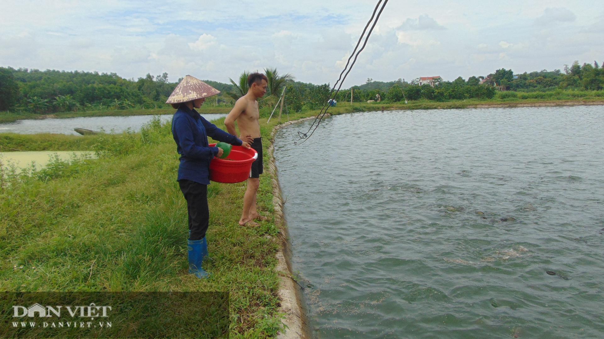 Thái Nguyên: Lão nông thu trăm triệu mỗi năm từ nuôi cá thả ao - Ảnh 5.