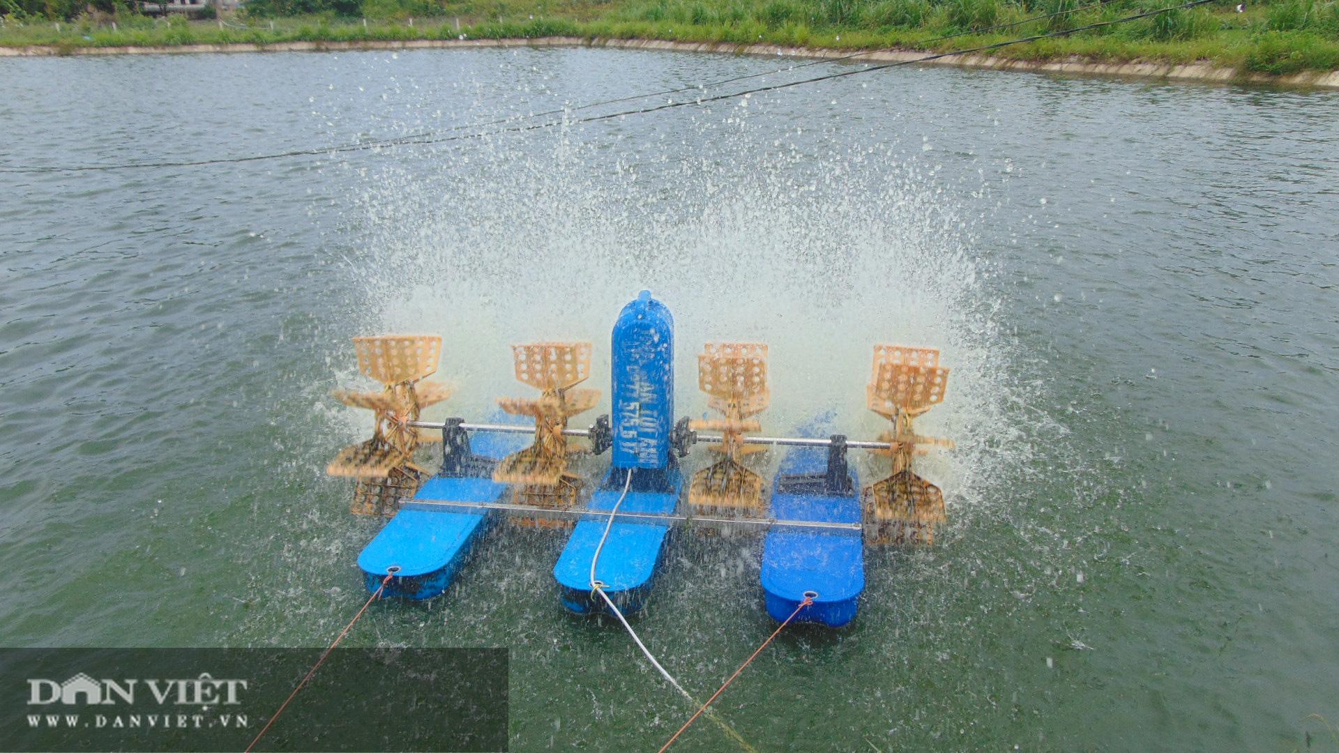 Thái Nguyên: Lão nông thu trăm triệu mỗi năm từ nuôi cá thả ao - Ảnh 4.