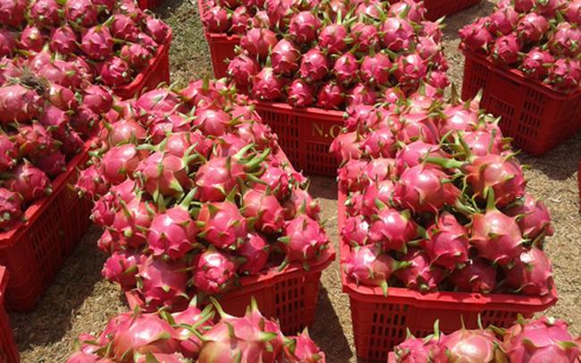 Biến động bên Tây, trái cây Việt gặp khó dội chợ, rẻ như rau - Ảnh 1.