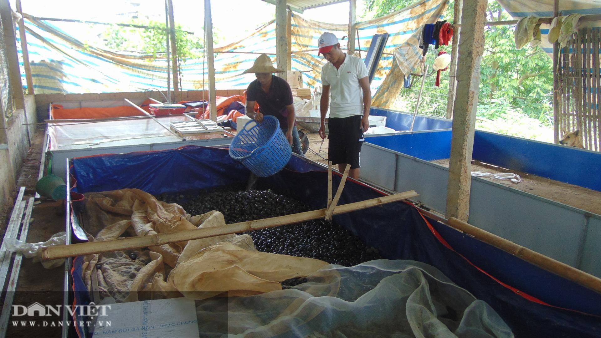 Thái Nguyên: Thanh niên trẻ thu hàng chục triệu mỗi ngày nhờ nuôi con ăn bèo dưới nước - Ảnh 4.