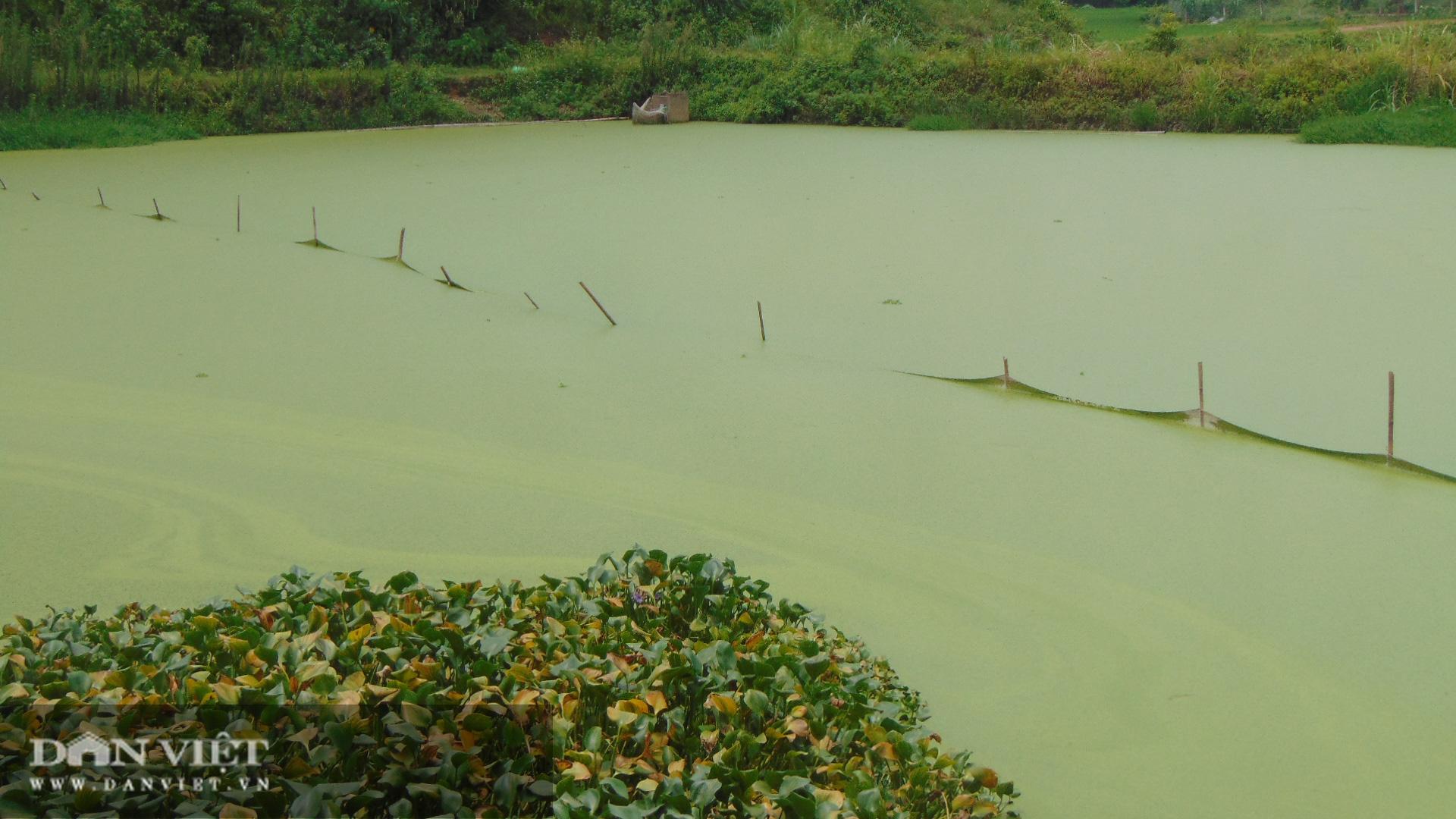 Thái Nguyên: Thanh niên trẻ thu hàng chục triệu mỗi ngày nhờ nuôi con ăn bèo dưới nước - Ảnh 2.