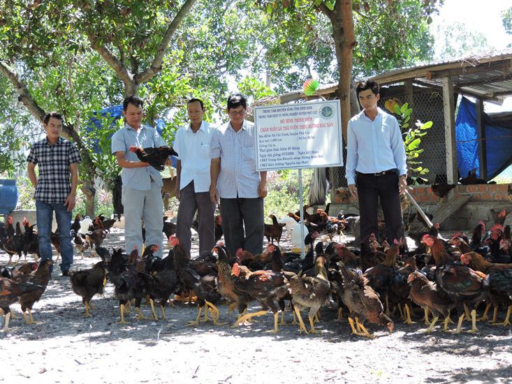 Bình Định: Nuôi gà bằng tỏi, gừng, nghệ, lá mơ lông...gà thường cũng biến thành gà đặc sản - Ảnh 1.