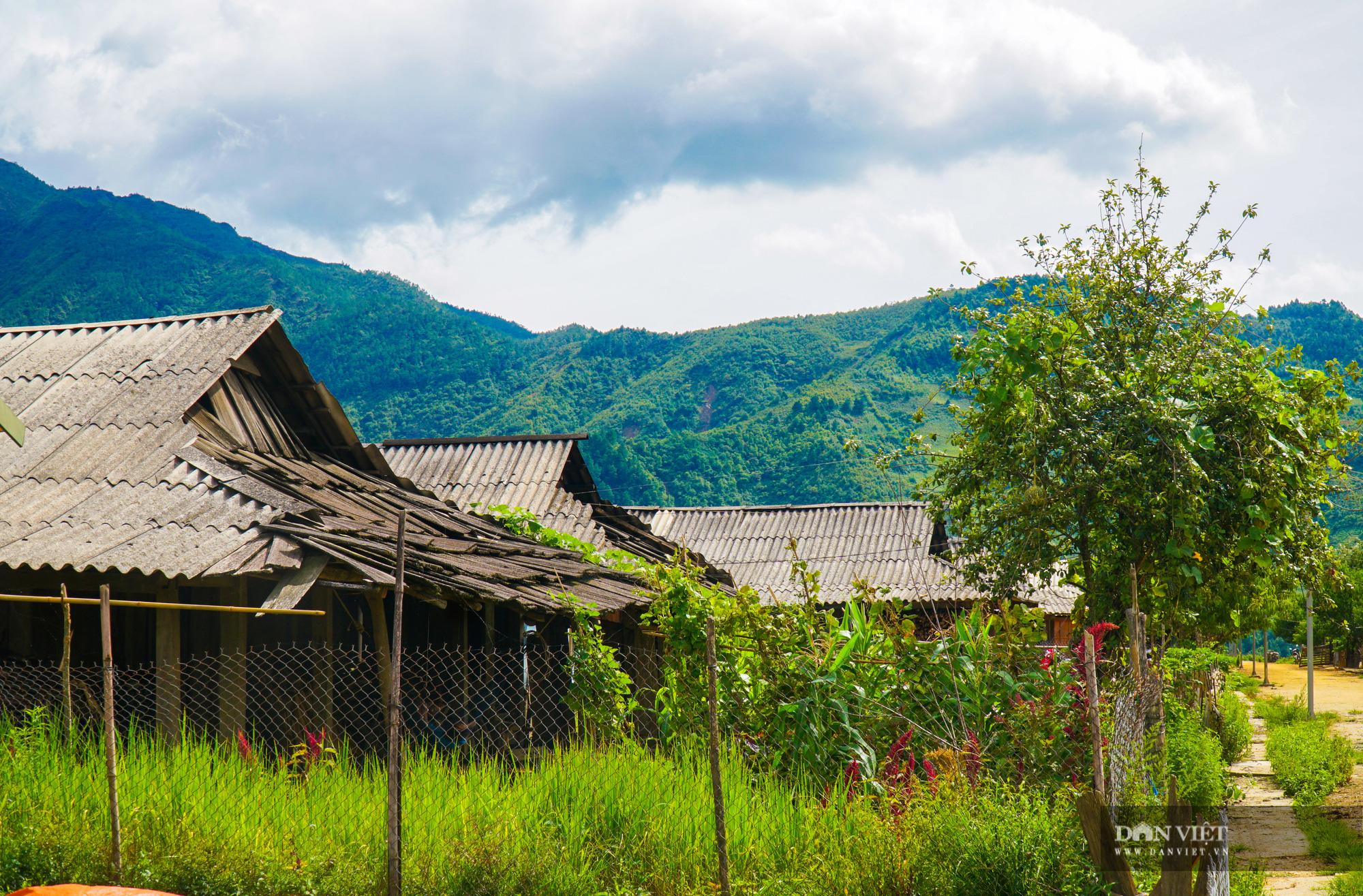 Cu Vai: Bản làng bằng phẳng đẹp nhất của người H'Mông - Ảnh 5.