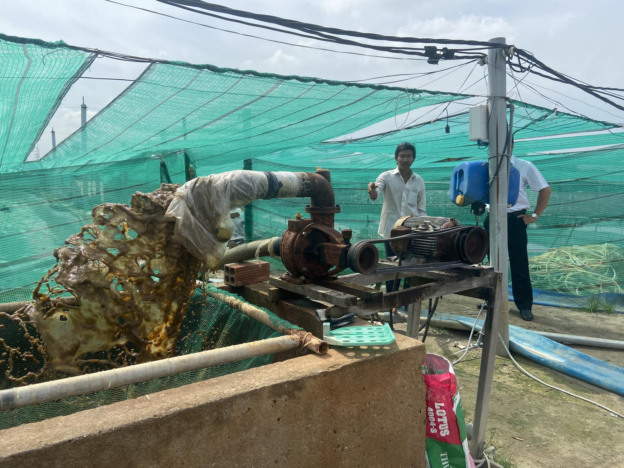 """""""Liều"""" nuôi tôm công nghệ cao dày đặc trên ao nổi, một nông dân tỉnh Đồng Nai thu 10 tỷ mỗi năm - Ảnh 4."""