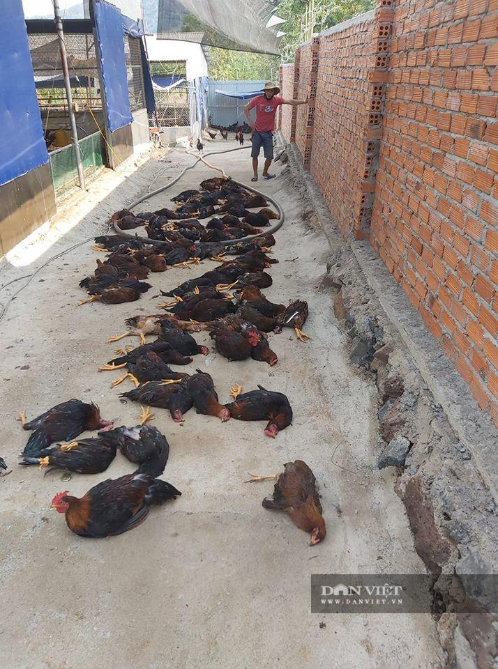 Sau nhiều tháng mất giá, trang trại liên tiếp 'đổ gục' vì sự cố, người nuôi gia cầm choáng váng bỏ nghề - Ảnh 3.
