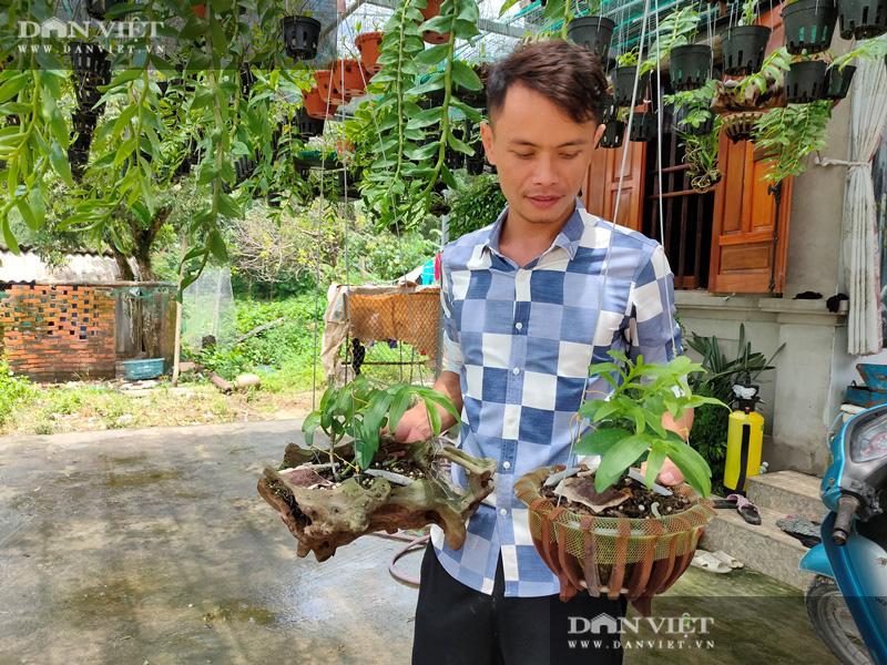 Thợ sửa ô tô ở đảo Bản Sen, mê lan, 4 năm nhân giống 500 giò phi điệp, bán 30 triệu/giò - Ảnh 1.