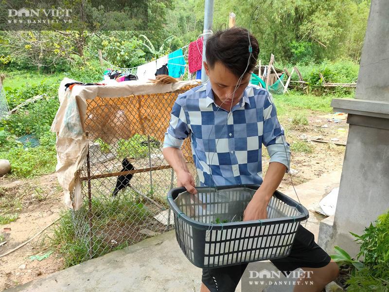 Thợ sửa ô tô ở đảo Bản Sen, mê lan, 4 năm nhân giống 500 giò phi điệp, bán 30 triệu/giò - Ảnh 3.