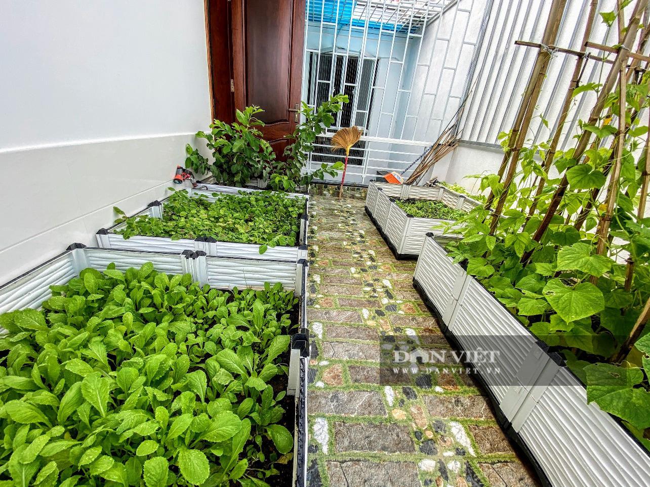 Làm vườn trên sân thượng, nữ kế toán phục vụ rau xanh, sạch quanh năm cho gia đình - Ảnh 2.