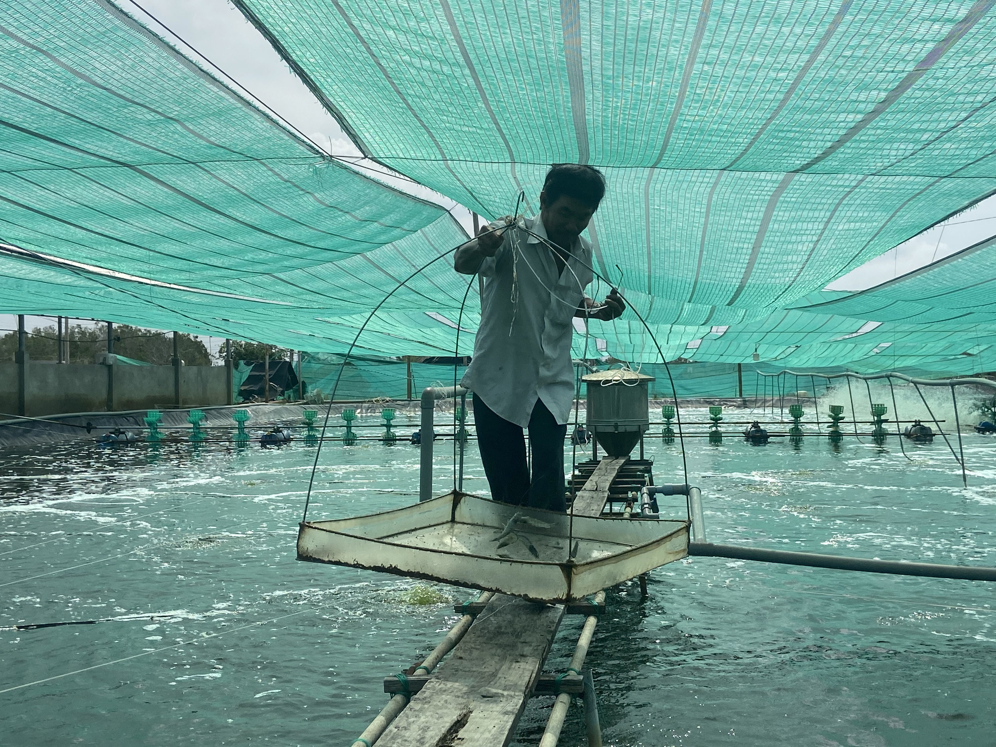 """""""Liều"""" nuôi tôm công nghệ cao dày đặc trên ao nổi, một nông dân tỉnh Đồng Nai thu 10 tỷ mỗi năm - Ảnh 1."""