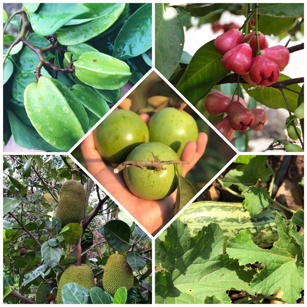 Chàng trai 23 tuổi - thanh xuân rực rỡ mỗi ngày chăm 2.000 gốc hồng, nuôi cá và trồng rau, cây ăn quả - Ảnh 9.
