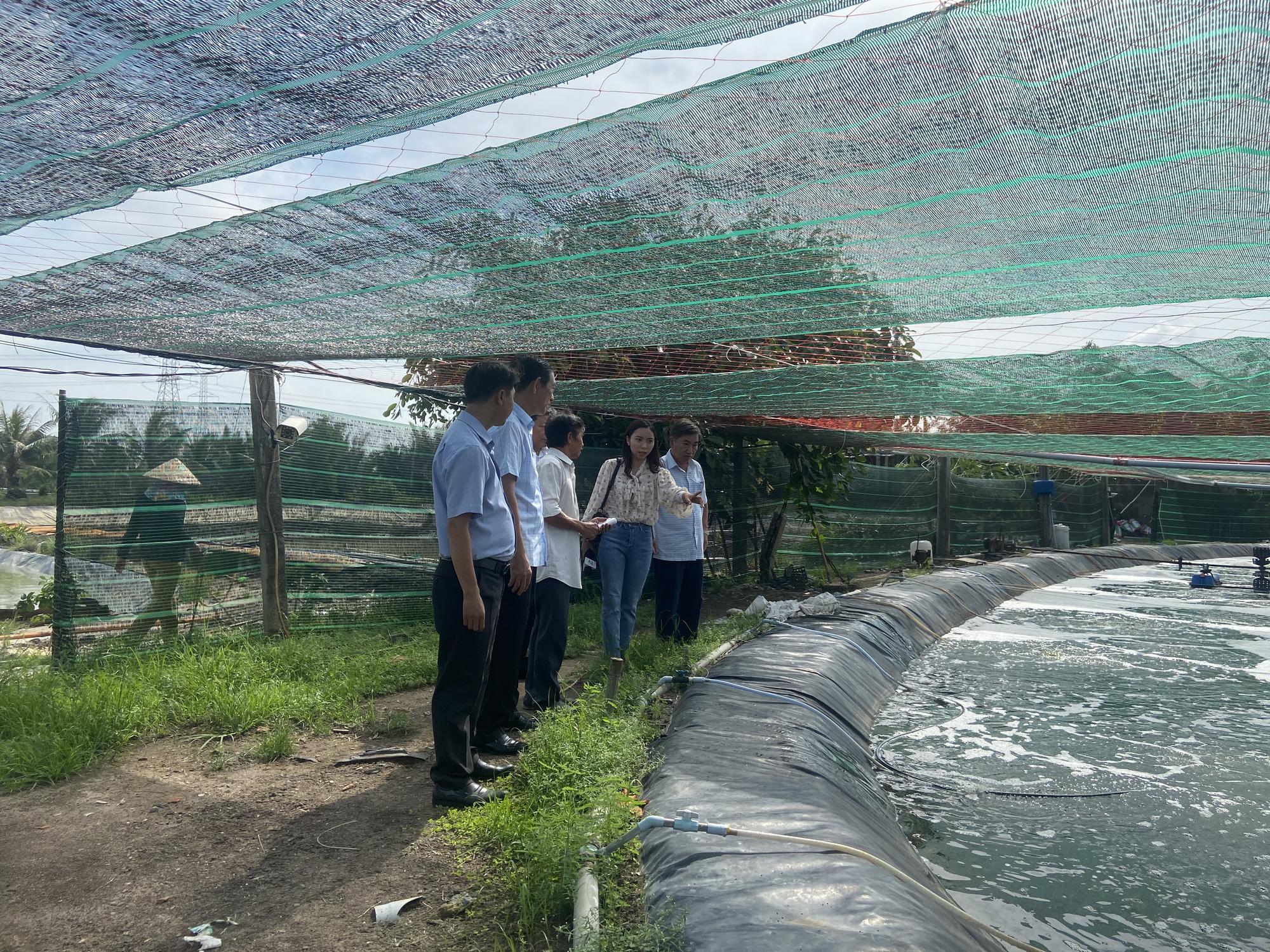 """""""Liều"""" nuôi tôm công nghệ cao dày đặc trên ao nổi, một nông dân tỉnh Đồng Nai thu 10 tỷ mỗi năm - Ảnh 5."""