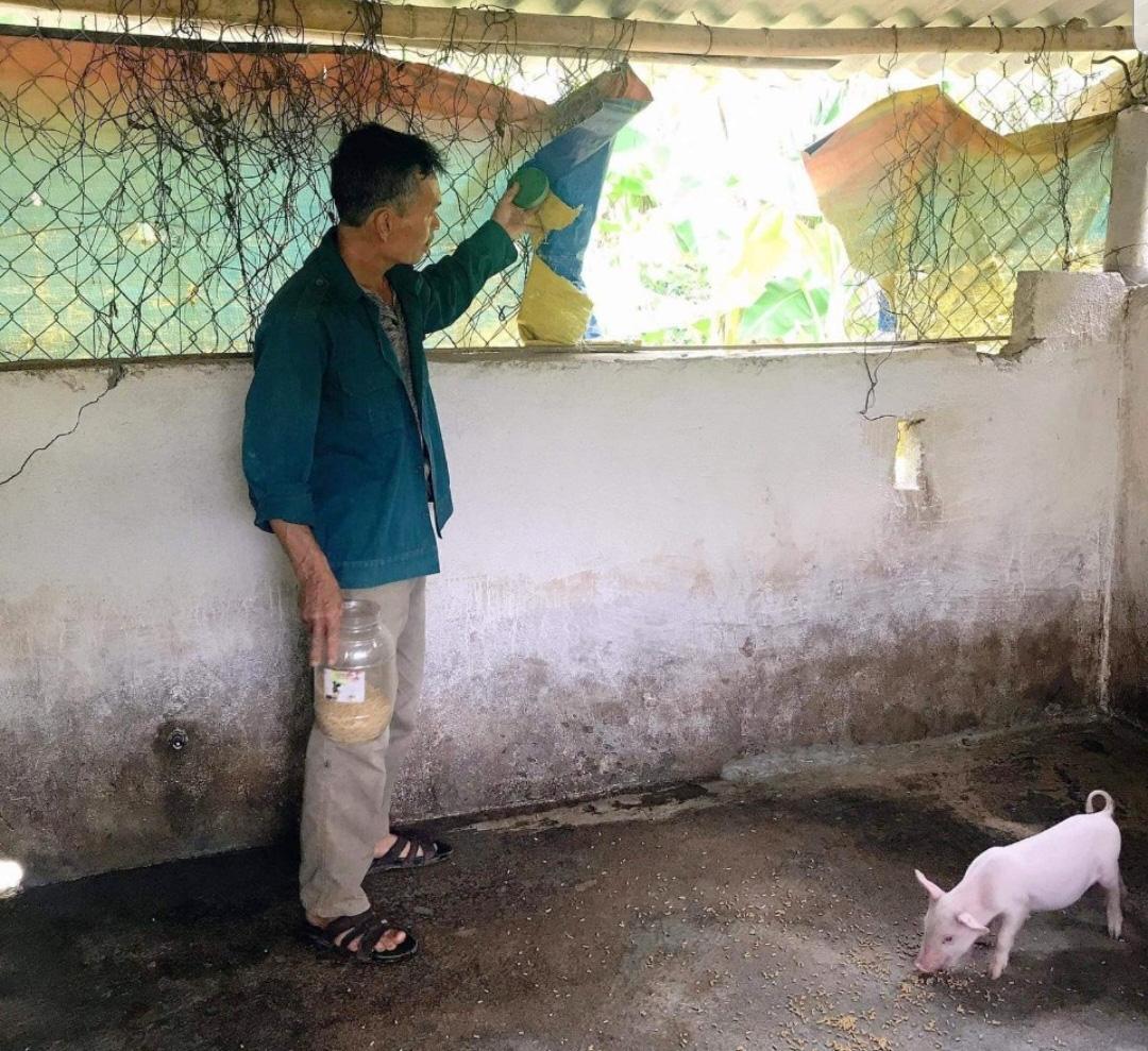 Quảng Trị: Bắt trộm lợn giống của nông dân đáng báo động, khổ nhất là mất trộm lợn tái đàn - Ảnh 1.