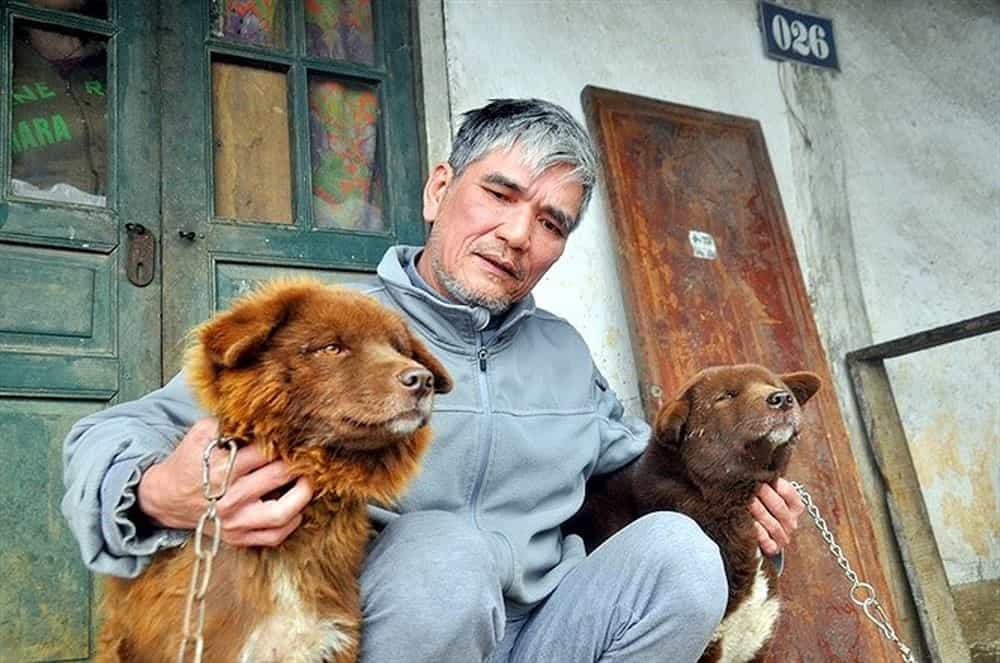 """""""Tứ đại quốc khuyển"""" của Việt Nam gồm những giống chó quý hiếm nào? - Ảnh 1."""