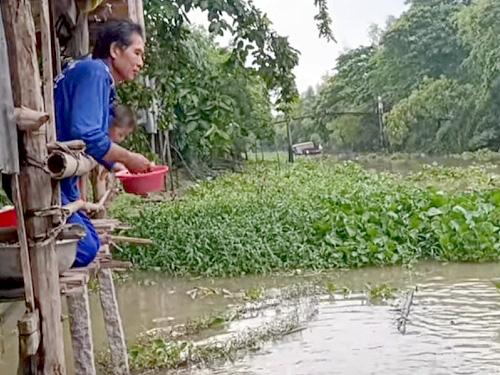 An Giang: Người dân ùn ùn kéo đến xem đàn cá tra ở đâu đến ở khúc kênh trước nhà - Ảnh 3.