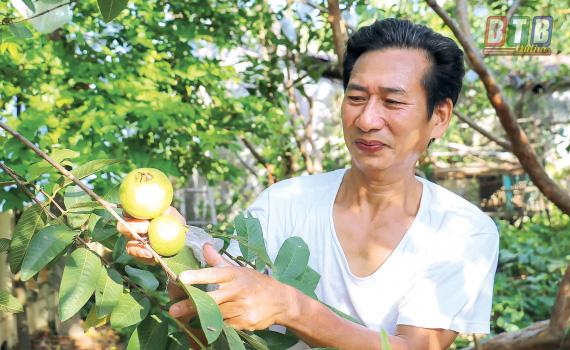 """Thái Bình: Hé lộ bất ngờ về """"báu vật"""" của làng là thứ trái đặc sản quý hiếm này đây - Ảnh 1."""