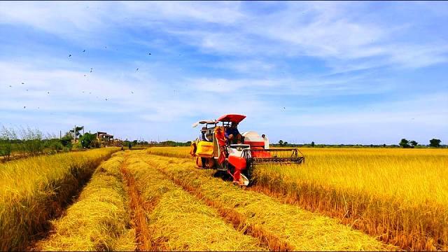 Ngành nông nghiệp tăng trưởng chậm nhất 4 năm nhưng nhiều tiềm năng phục hồi - Ảnh 1.
