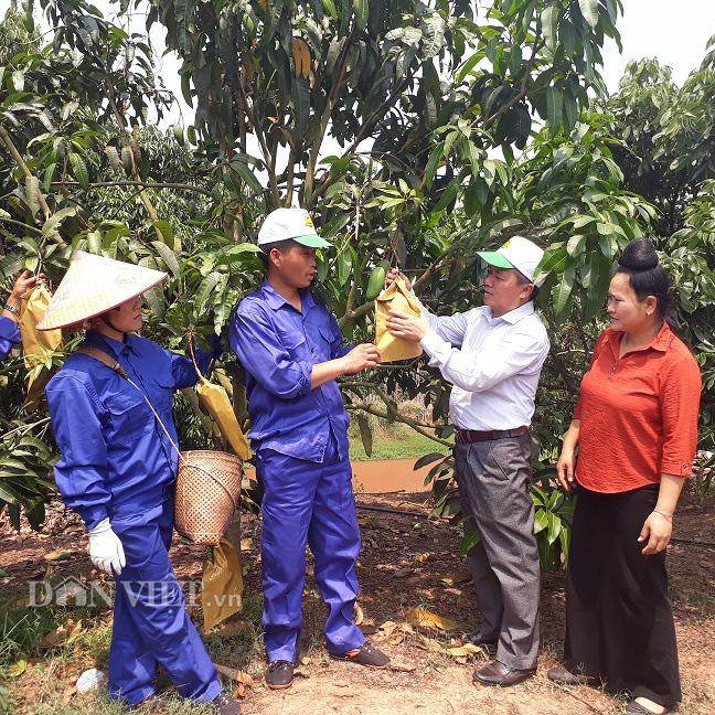 Cây ăn quả lan rộng,Yên Châu nhiều triệu phú  - Ảnh 1.