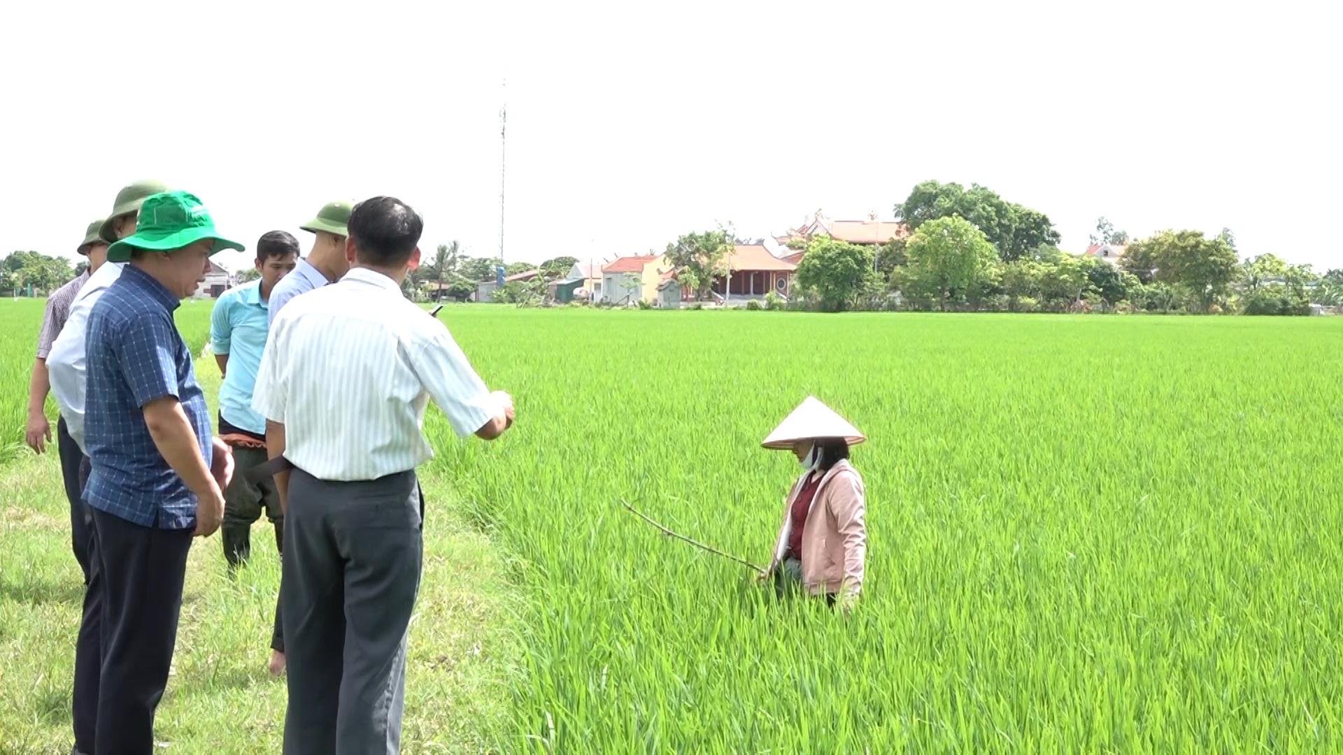 ĐBSH xuất hiện dịch bệnh hại trên lúa, Cục BVTV yêu cầu các tỉnh tập trung bảo vệ 840.000ha lúa - Ảnh 2.