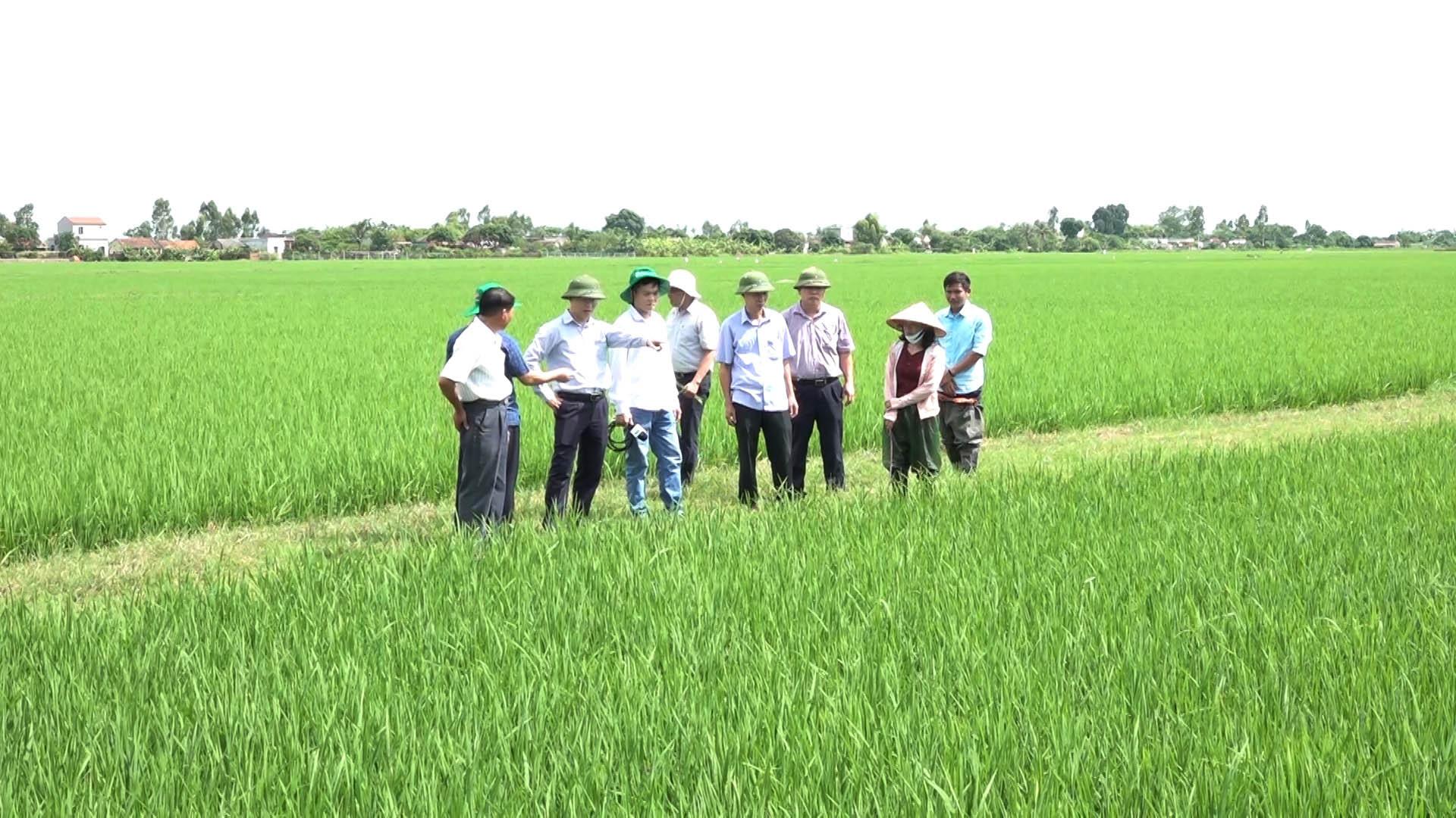 ĐBSH xuất hiện dịch bệnh hại trên lúa, Cục BVTV yêu cầu các tỉnh tập trung bảo vệ 840.000ha lúa - Ảnh 1.